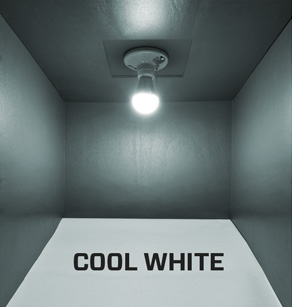 Warm white or cool white, which LED bulb should you choose?